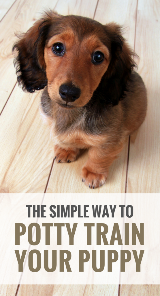 how to train your puppy to walk