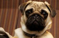Jealousy In Dogs: Just Like Humans New Study Suggests