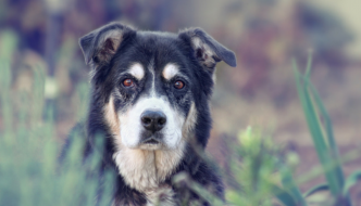 Some Of Us Can't Handle Euthanasia, And That's OK