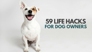 59 Simple Life Hacks for Dog Owners