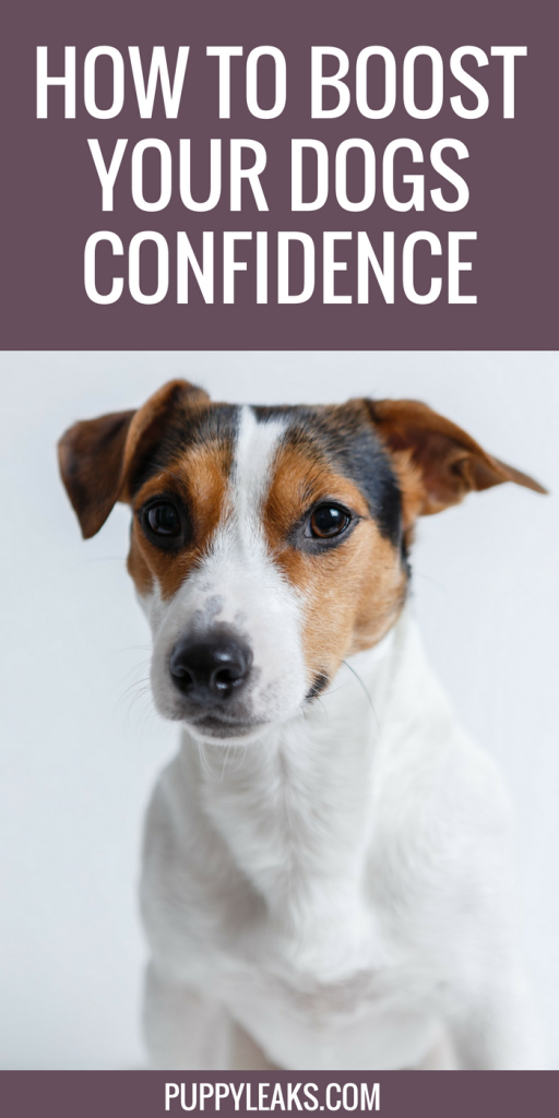 5 Ways to Boost Your Dogs Confidence