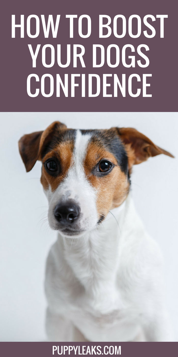 By working on some basic obedience work you can help boost your dogs confidence in new situations. Here's how I trained my dog to be confident around new people and situations.