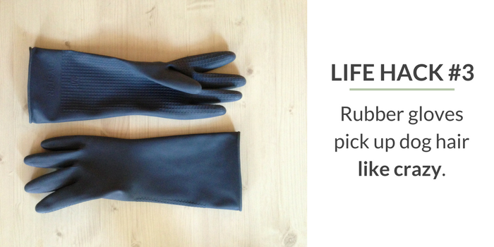 Use Rubber Gloves to Pick up Dog Hair