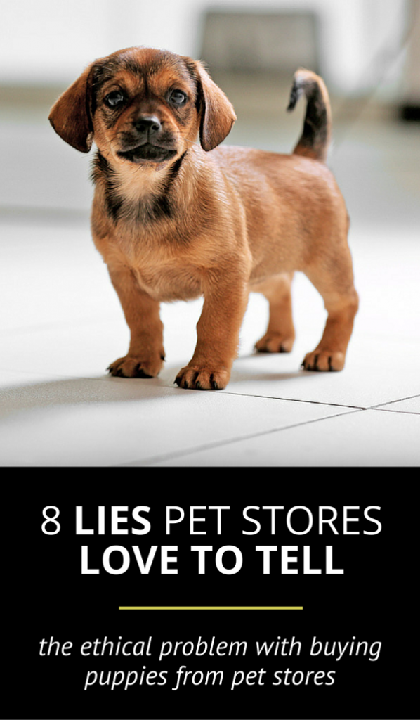 8 Lies Pet Stores Love to Tell