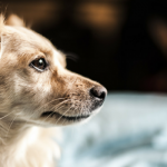 5 Ways to Help a Dog That Limps at Night