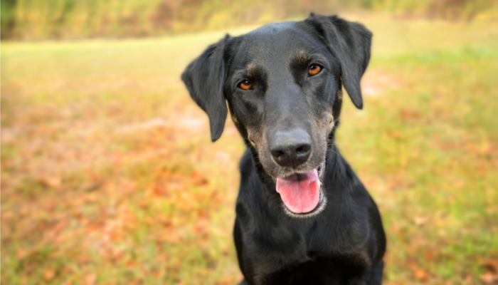 5 Ways to Keep Your Dog Fit