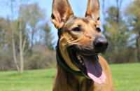 Roundup 56: Favorite Dog Articles & Videos of the Week