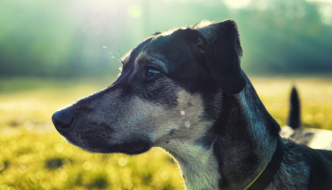 Can You Get Poison Ivy From Your Dog?