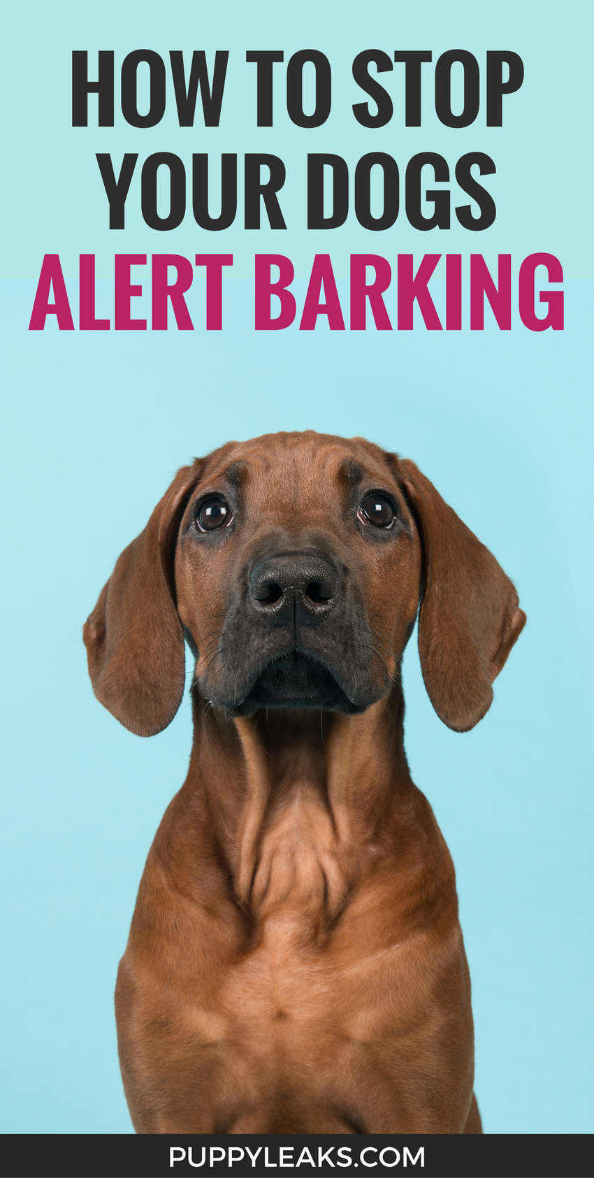 How To Stop A Dog Barking At Everything That Moves