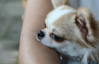 Study Finds Dogs Reduce Stress in Families With Autistic Children