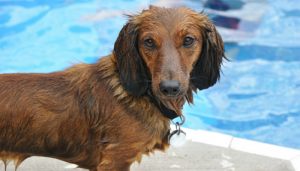 Studies Find Swimming Improves Mobility in Dogs
