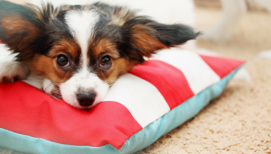 3 Misconceptions About Comforting a Fearful Dog