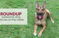 Roundup 65: Favorite Dog Articles & Videos of the Week