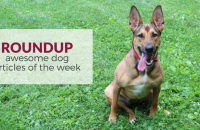 Roundup 66 – Favorite Dog Articles & Videos of the Week