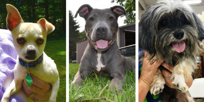 adopt a dog in southeast michigan