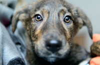 10 Great Places to Adopt a Dog in Southeast Michigan