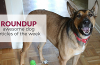 Roundup 69: Favorite Dog Articles & Videos of the Week