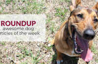 Roundup 70: Favorite Dog Articles & Videos of the Week
