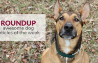 Roundup 71: Favorite Dog Articles & Videos of the Week