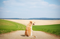 25 Powerful Quotes About Losing a Dog & Dealing With Grief