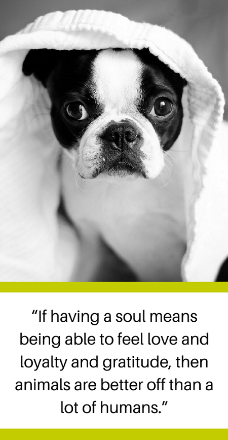 25 Quotes About Losing a Dog & Dealing With Grief