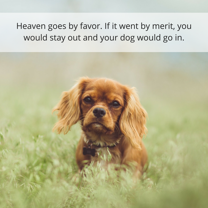 30 Quotes About Losing a Dog & Dealing With Grief
