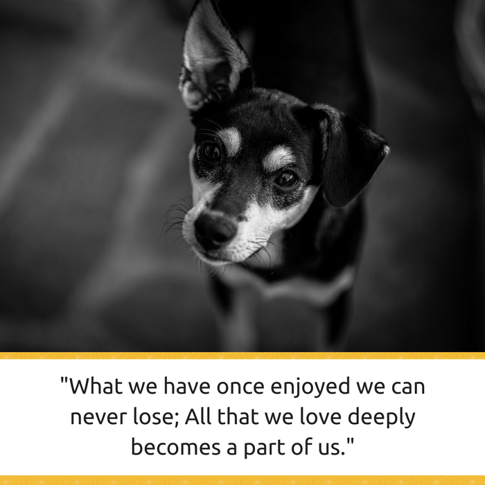 Loss Of Pet Quotes For Dogs