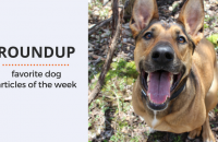 Roundup 75: Favorite Dog Articles & Videos of the Week