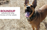 Roundup 73: Favorite Dog Articles & Videos of the Week