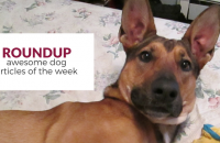 Roundup 74: Favorite Dog Articles & Videos of the Week