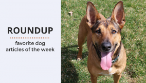 Roundup 76: Favorite Dog Articles & Videos of the Week
