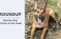 Roundup 77: Favorite Dog Articles & Videos of the Week