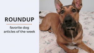 Roundup 78: Favorite Dog Articles & Videos of the Week