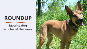 Roundup 79: Favorite Dog Articles & Videos of the Week