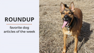 Roundup 80: Favorite Dog Articles & Videos of the Week