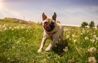 25 Ways to Make Your Dog Happy