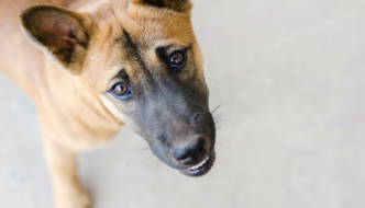 5 Things Not to Do When Teaching Your Puppy Not to Bite