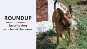 Roundup 81: Favorite Dog Articles & Videos of the Week