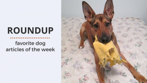 Roundup 82: Favorite Dog Articles, Videos & Deals of the Week