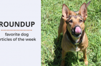 Roundup 83 – Favorite Dog Articles, Videos & Deals of the Week
