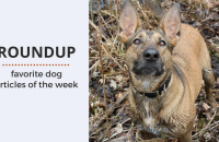 Roundup 84 – Favorite Dog Articles, Videos & Deals of the Week
