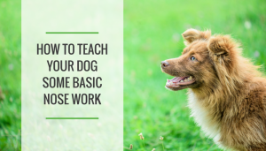 How to Teach Your Dog Some Basic Nose Work