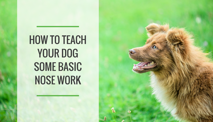 How to Teach Your Dog Some Basic Nose Work Games