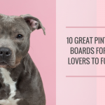 15 Great Pinterest Boards for Dog Lovers to Follow