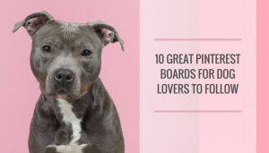 10 Great Pinterest Boards for Dog Lovers to Follow