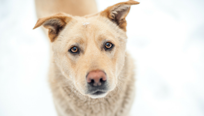 Cool Things Science Taught us About Dogs in 2016