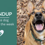 Roundup 86: Favorite Dog Articles, Videos & Deals of the Week