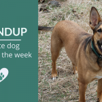 Roundup 87: Favorite Dog Articles, Videos & Deals of the Week