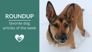Roundup 88: Favorite Dog Articles, Videos & Deals of the Week