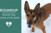Roundup 89: Favorite Dog Articles, Videos & Deals of the Week